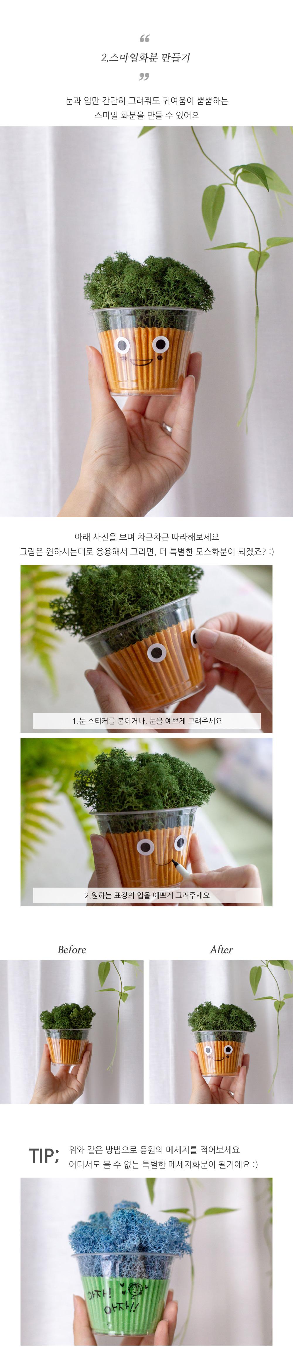 (6컬러) 컵 스칸디아모스 공기정화 습도조절 모스 이끼 공기정화식물 화분 - 아티파티, 5,500원, 조화, 부쉬