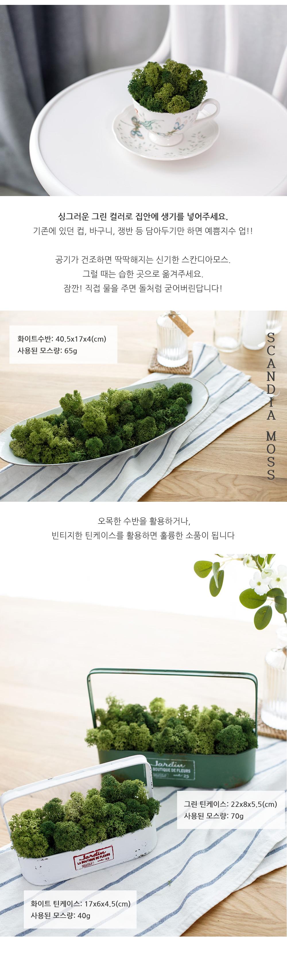 천연이끼 공기정화 식물 스칸디아모스 단품 25g - 아티파티, 3,900원, 조화, 프리저브드